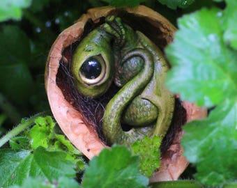 Dragon baby in a walnut shell