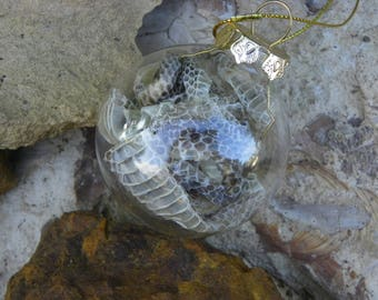 Cruelty Free Real Banded Rock Rattler Rattlesnake Skin Shed Glass Ornament. No. 3