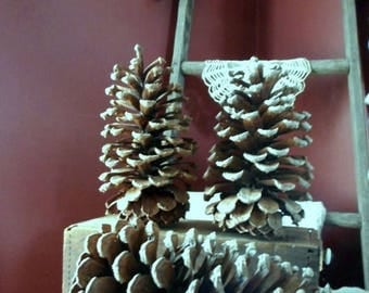"""Long Leaf HUGE 8"""" Pine Cones LOWEST PRICE  North Carolina Rustic Home cottage country Lodge cabin Yard Decor Christmas Tree Mantel Garland"""