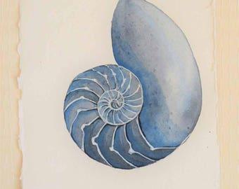 Chambered nautilus original watercolour painting illustration sea shell picture coastal decor beach style series