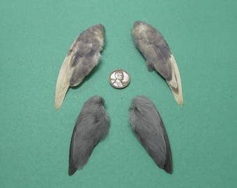 2  Pairs of Dried Birds Wings Feathers Art Craft Taxidermy Grey and Lavender Shipping Included