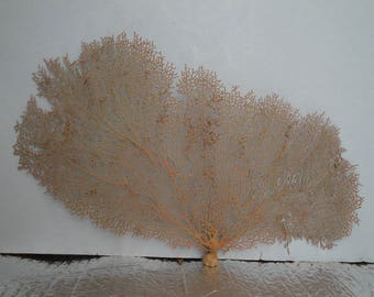 "15"" x 8.5"" Natural Red Color Sea Fan Seashells Reef Coral"