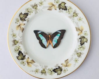 Blue Black Moth Butterfly Insect Bone China with Dark Green Leaf Display 3D Plate Collage Sculpture for Wall Decor Birthday Wedding Gift