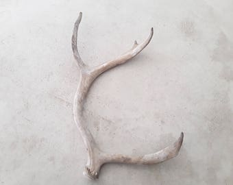 1 natural real caribou antler design decor crafts rustic antler display