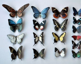 Butterfly Magnets Set of 18 Multi Color Insects Refrigerator Magnets Kitchen Magnets Home Decor Kitchen Decor Gifts