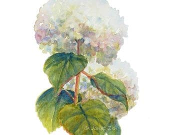 Hydrangea painting 8x10 original watercolor, white flower decor, impressionist floral wall art by Janet Zeh Original Art