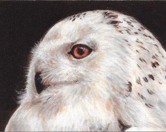 Snowy Owl Profile