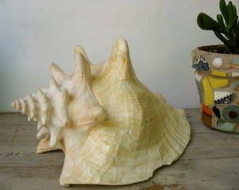 Large Conch Shell Beach Decor Nature Wedding Decor Planter Nautilus Shell