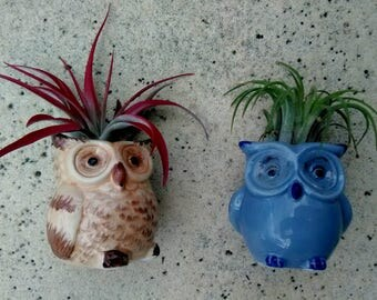 Wise Owl Air Planter with Air Plant