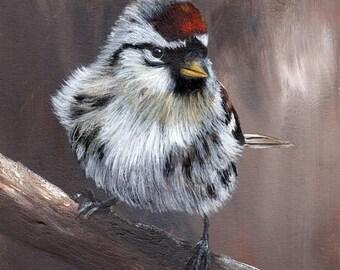 SALE Bird Art Painting Common Redpoll SFA Wildlife Original hand painted bird acrylic painting by Australian Artist Janet M Graham