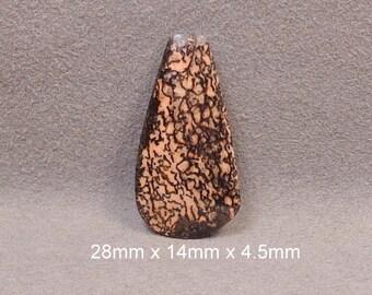 DINOSAUR BONE, Agatized Fossilized Cabochon