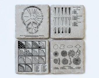 Vintage Microbiology Illustration Coasters, Set of 4, Science, Biology Gift
