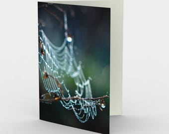 Cob Web Cards, Blank Note cards, Nature Cards, Greeting Cards, Three Blank Cards, 5x7 Nature Cards, Nature Blank Card, All Occasion Cards