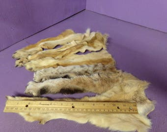 4 tanned coyote front legs with feet claws 2 bobcat real taxidermy paws fur skin pelt craft supply
