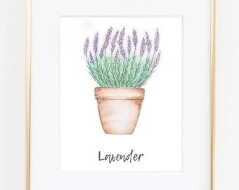 Watercolor Lavender Herb Print, Watercolor Painting, Plant Wall Art, Herb Art, Botanical Plant Decor, Botanical Art, Botanical Print
