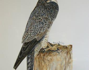 Custom Peregrine Falcon print