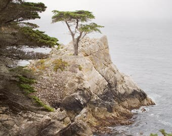 Lone Cypress - Fine Art Photography Print