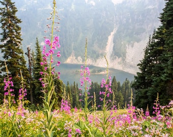 North Cascades National Park, Wildflowers