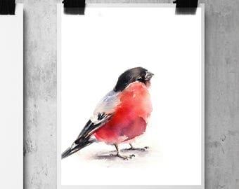 Bullfinch bird fine art print, bird watercolor painting print, bird art, bird wall art print, red bird