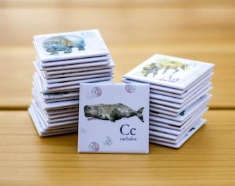 Cachalot Aimants frigo Cathy Faucher illustration  2x2 pouces  Aimants rigides  Illustré au Québec  Imprimé au Canada