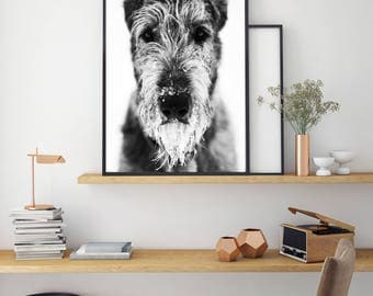Irish Wolfhound Print, Black And White Art, Animal Poster, Digital Print, Cool Dog Art, Instant Download