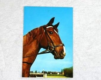 Vintage Horse Postcard Brown Horse Postcard West Germany Kruger Collectible Postcard Equine Postcard