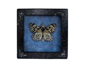 real framed spiders and insects par tarantulabox sur etsy. Black Bedroom Furniture Sets. Home Design Ideas