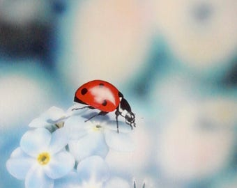 Ladybird print, art print, forget me not and ladybird print, A3 hand signed art print,Free UK Shipping! Nature lover,gift idea