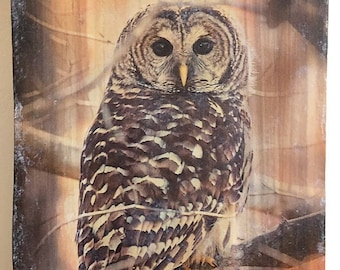 Barred Owl image on wood, natural owl wooden decoration, owl art specialty, unique wildlife decor, nature art,gift idea, specialty nature