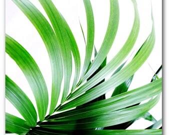Palm Leaf Print, Abstract Tropical Leaf, Summer Art, Tropical Palm Leaves, Tropical Theme Decor, 8 x 10 inches, Unframed
