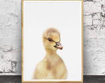 Duckling Print, Nursery Animals, Nursery Printable, Nursery Animal Print, Nursery Art Print, Duckling Wall Art, Baby Duckling, Baby Animal