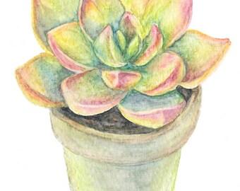 Warm Succulent