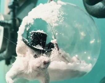 Taxidermy Mouse decoration ~ oddities, curio, curiosities