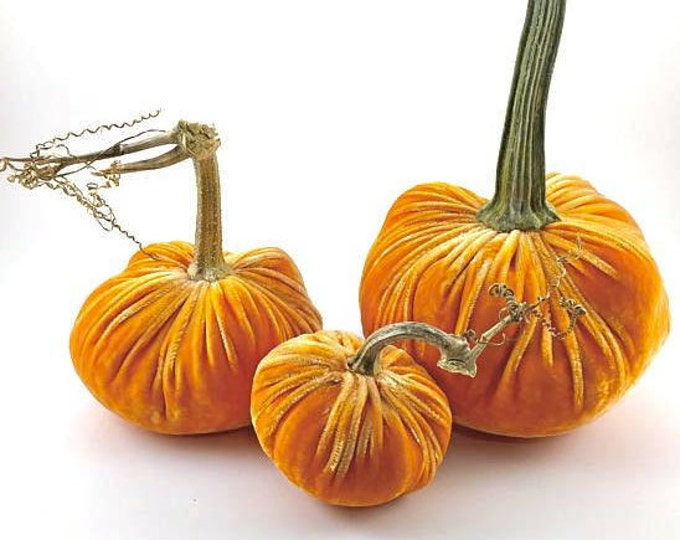Featured listing image: Orange Velvet Pumpkins with Real Pumpkin Stems