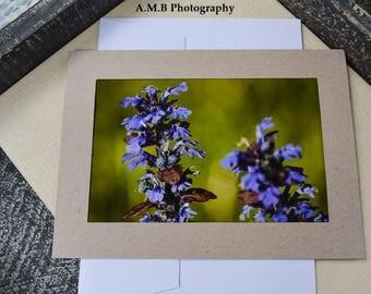 Photo Card, 5 x 7 inch, blank card, Nature Photography, Nature Print, flower photography, flower print, macro print, Bugleweed Blooms