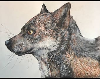 Wolf in Colored Pencil- Print