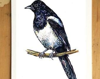 Magpie // Bird Illustration // A6 // Art Print