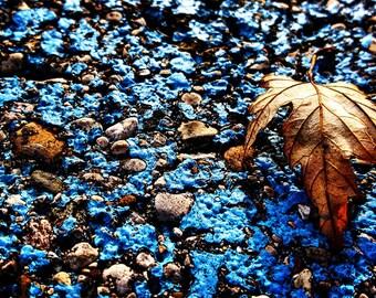 Leaf on a blue painted parking lot line photo print