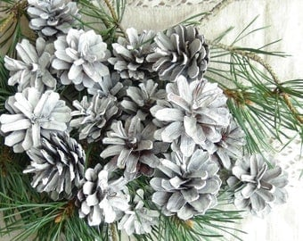 Vintage white pine cones,DIY,natural pine cones,tonned white,for wreaths,Christmas compositions,modeling,fantastic compositions,set of 25