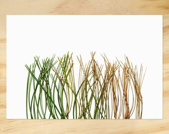 Rainbow Grass Print