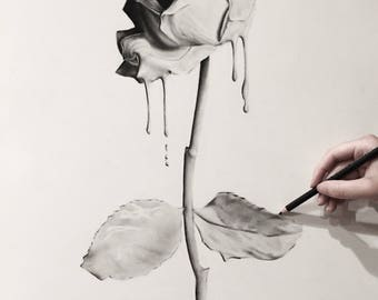 ORIGINAL Dripping rose Charcoal Drawing - Large Wall Art - Black and white