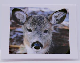 Blank Greeting Card: Sweet Little Deer