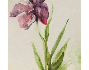 Flower Study-  5.5×8.5 Watercolor Painting