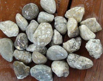 Pack of 25 Raw Petoskey/Fossil Stones #2