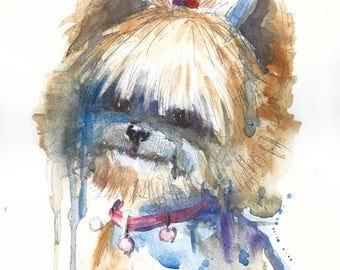 Yorkshire Terrier #2
