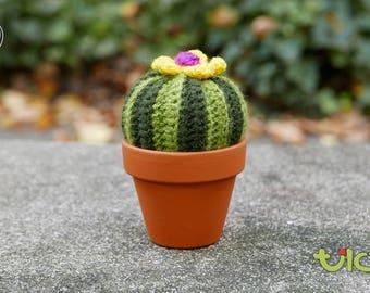 M - Barrel Cactus
