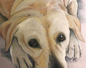 Pet Portraits, Dogs, Cats, any Animal portrait welcome