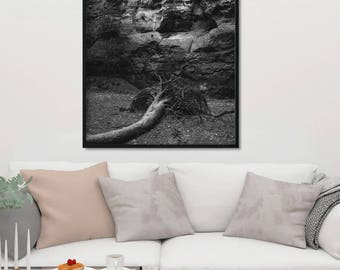 Black and White Art Photography, Fallen Tree Fine Art Print, Nature Photography, Forest Print, Film Photo, Great Lighting, Storm Aftermath
