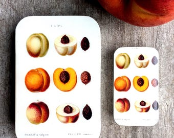 Peach tin SMALL,  botanical notions tin treasure box, jewellery box, pill box