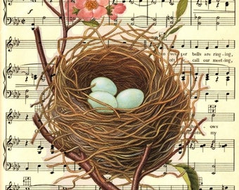 Vintage Botanical Robins Nest With Eggs on Sheet Music Background - A9 - 8.50x11- Digital Download